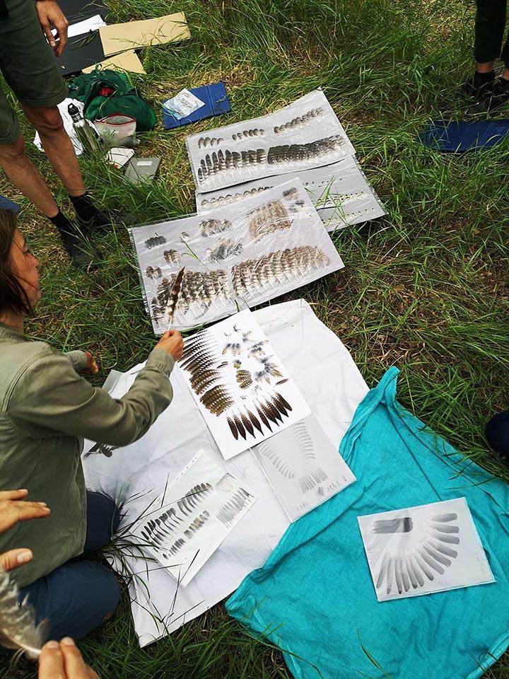 Naturverbindung Vogelkunde Vogelsprache Wildnispädagogik Naturmentoring